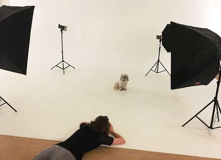 dierenfotografie studio